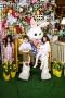 Easter-2919